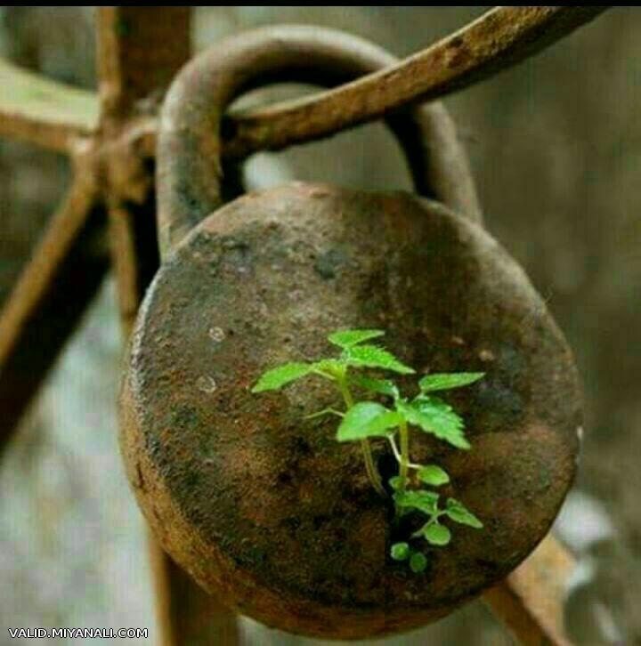 تو فقط تصمیم بگیر آغاز کنی ، میل به جوانه زدن  معجزه میکند حتی در دل آهن...!!!