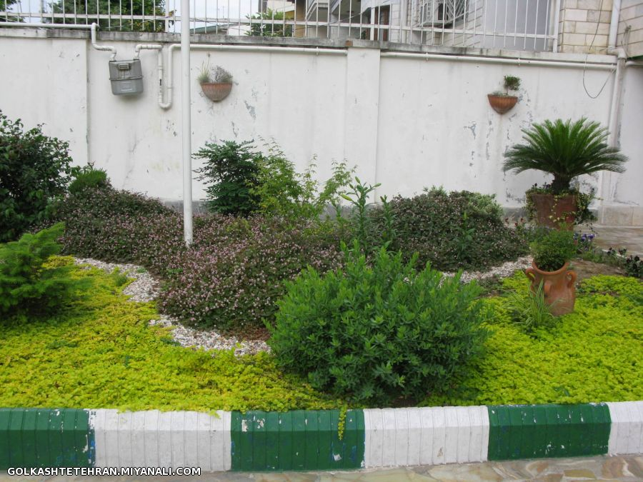 طرح باغچه نوئل سبز و فرانکینیا پوششی