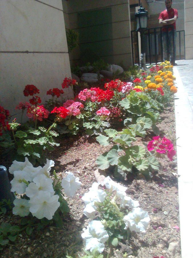 گل کاشت تهران
