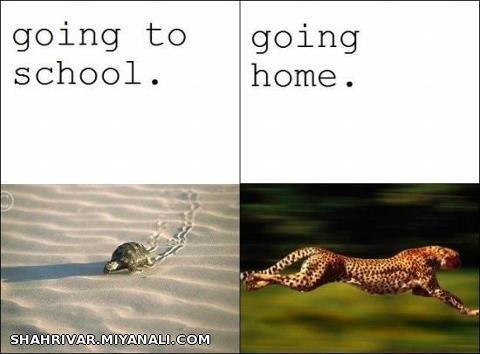 طرز رفتن به مدرسه و آمدن از مدرسه دانش آموزان